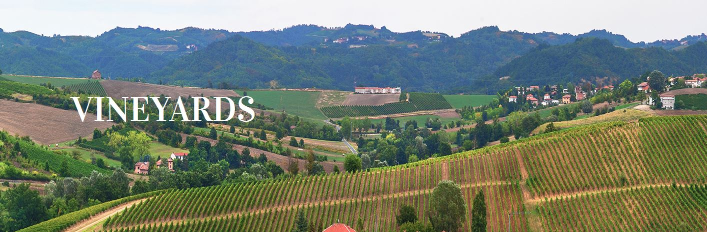 wijngaarden van Tortonese